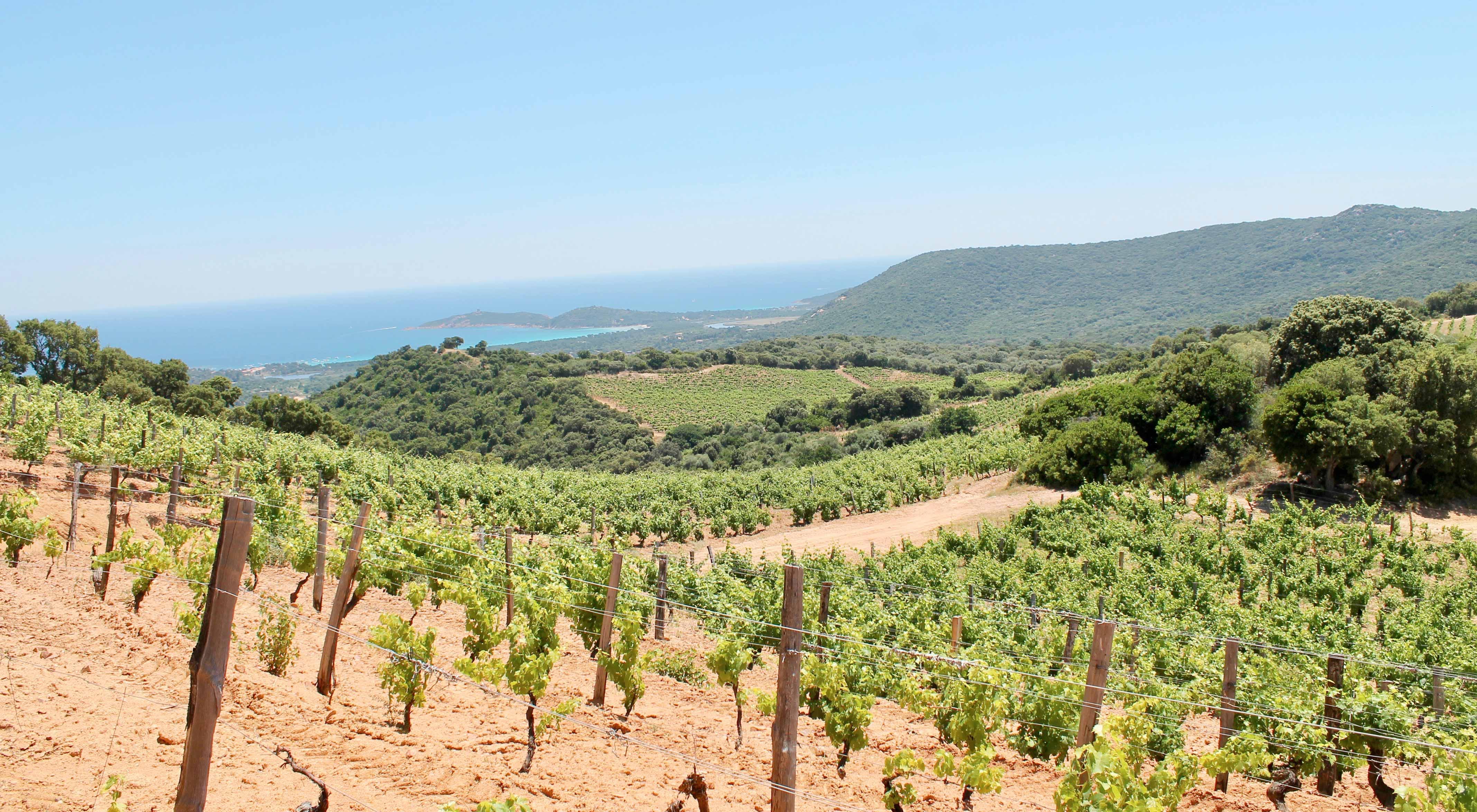 Corsica wine tour, vineyard with bayview