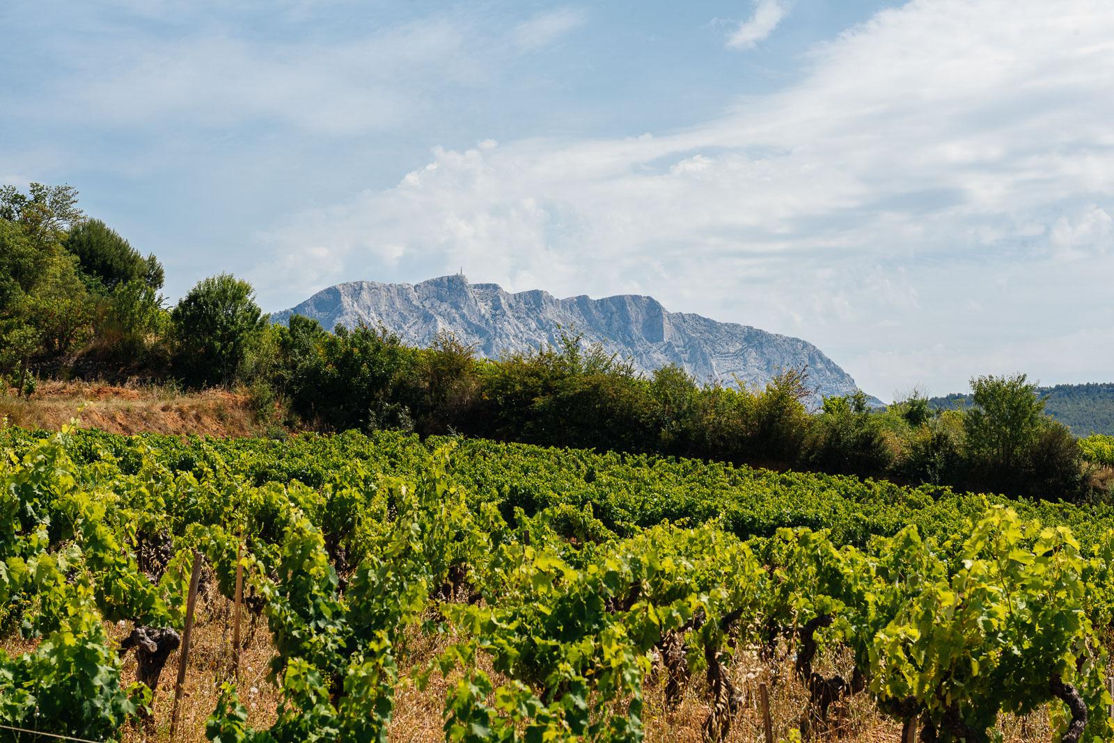 Provence wine tour, vineyard background Mount Sainte Victoire