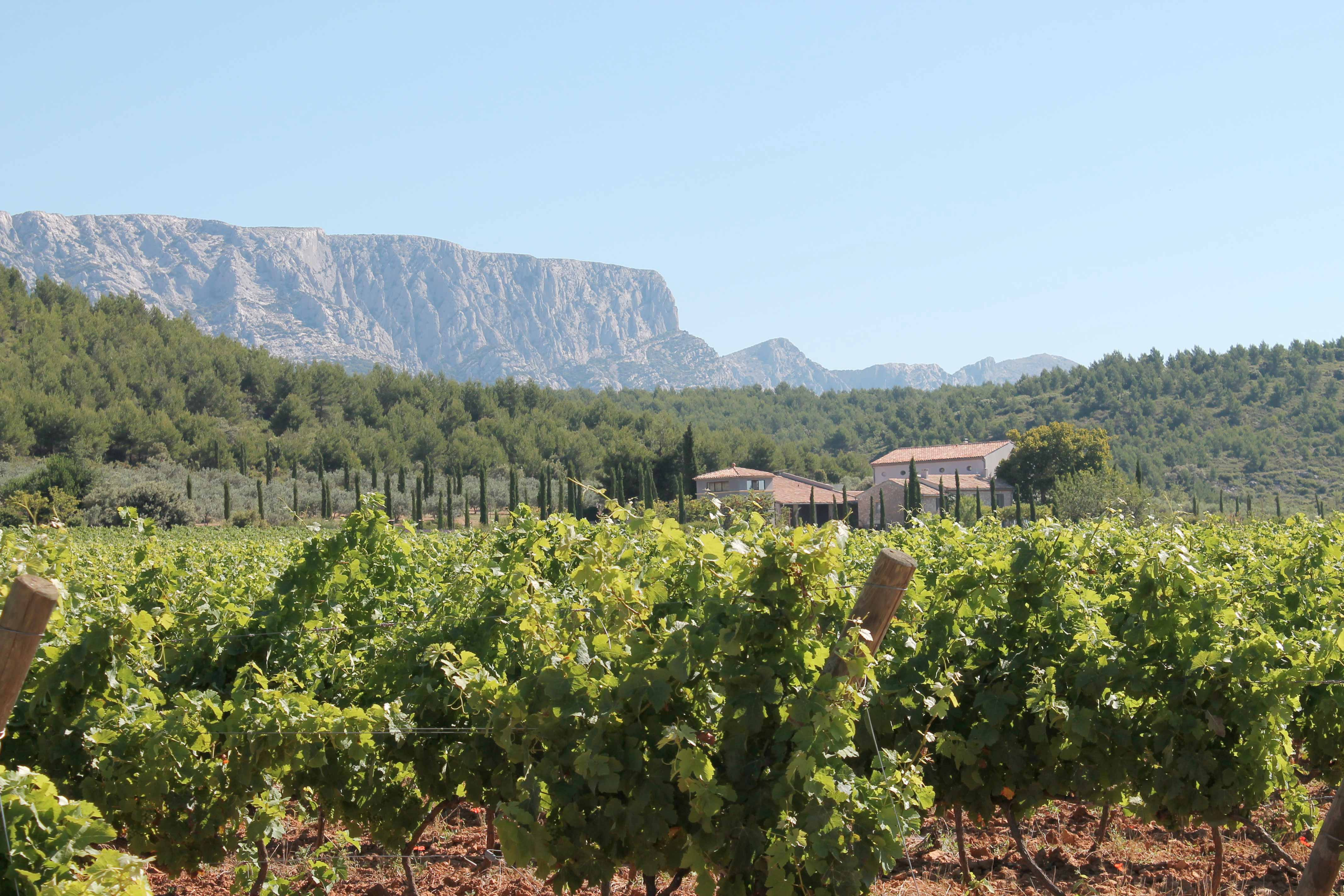 Provence wine tour, vineyard and winery at Sainte Victoire