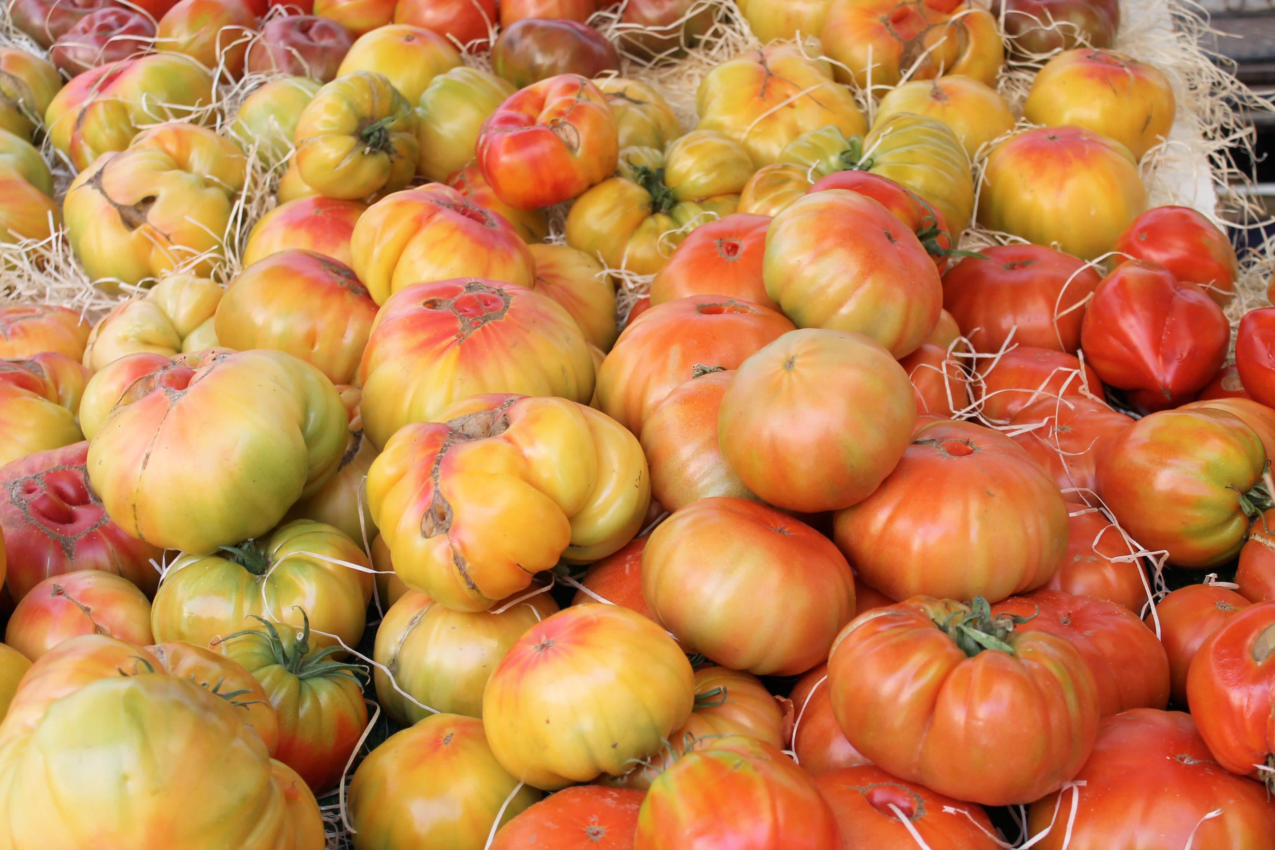 Shore excursion, beefheart tomato stall, Aix en Provence
