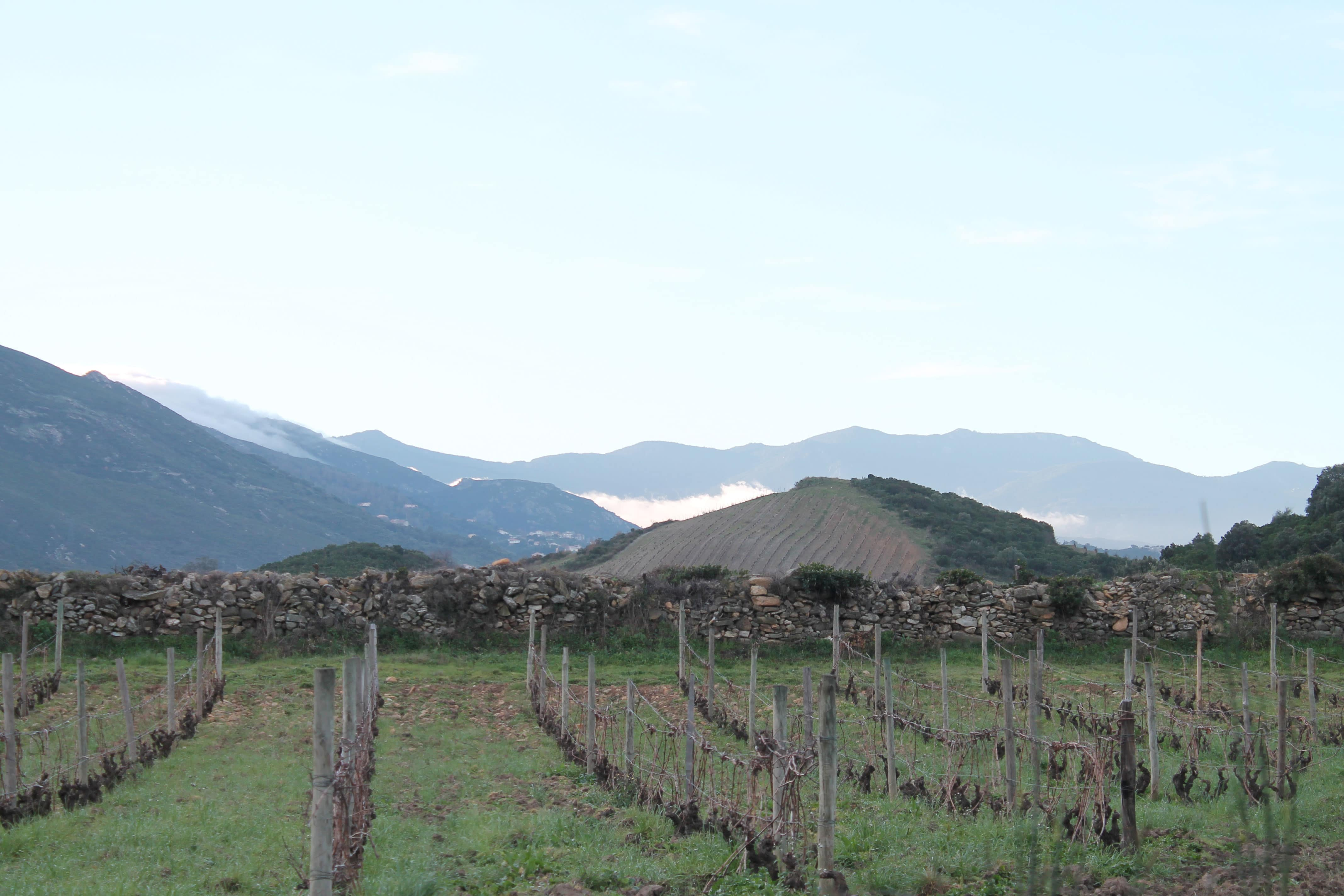Corsica wine tour, vineyard in the mountains
