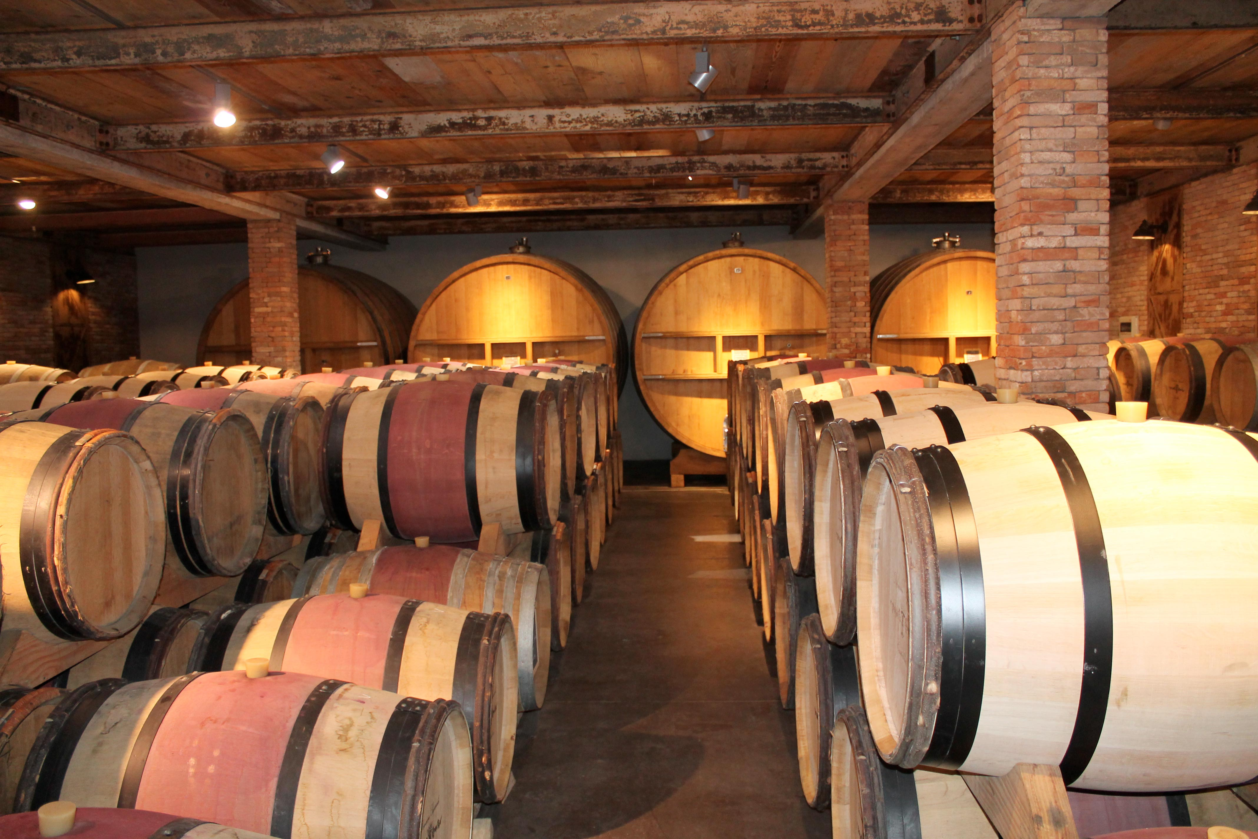 Corsica wine tour, barrels in cellar