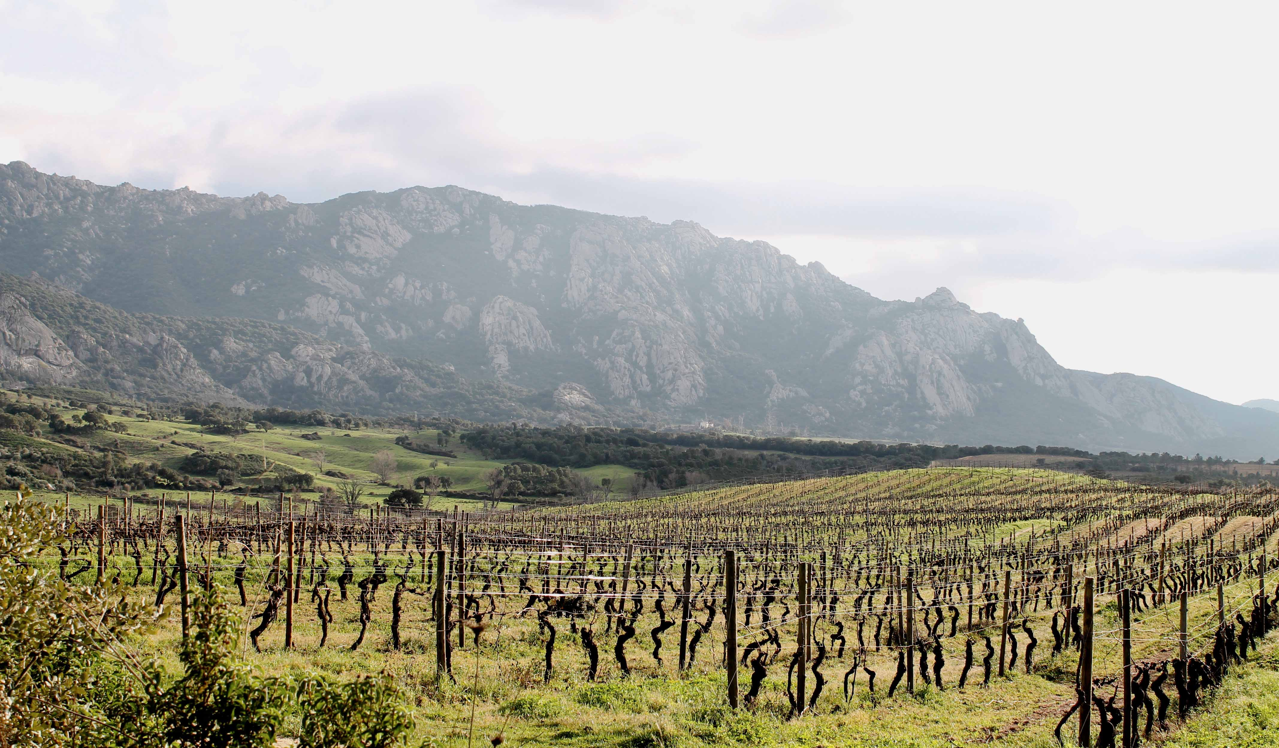 Corsica wine tour, vineyard at the foot of a mountain