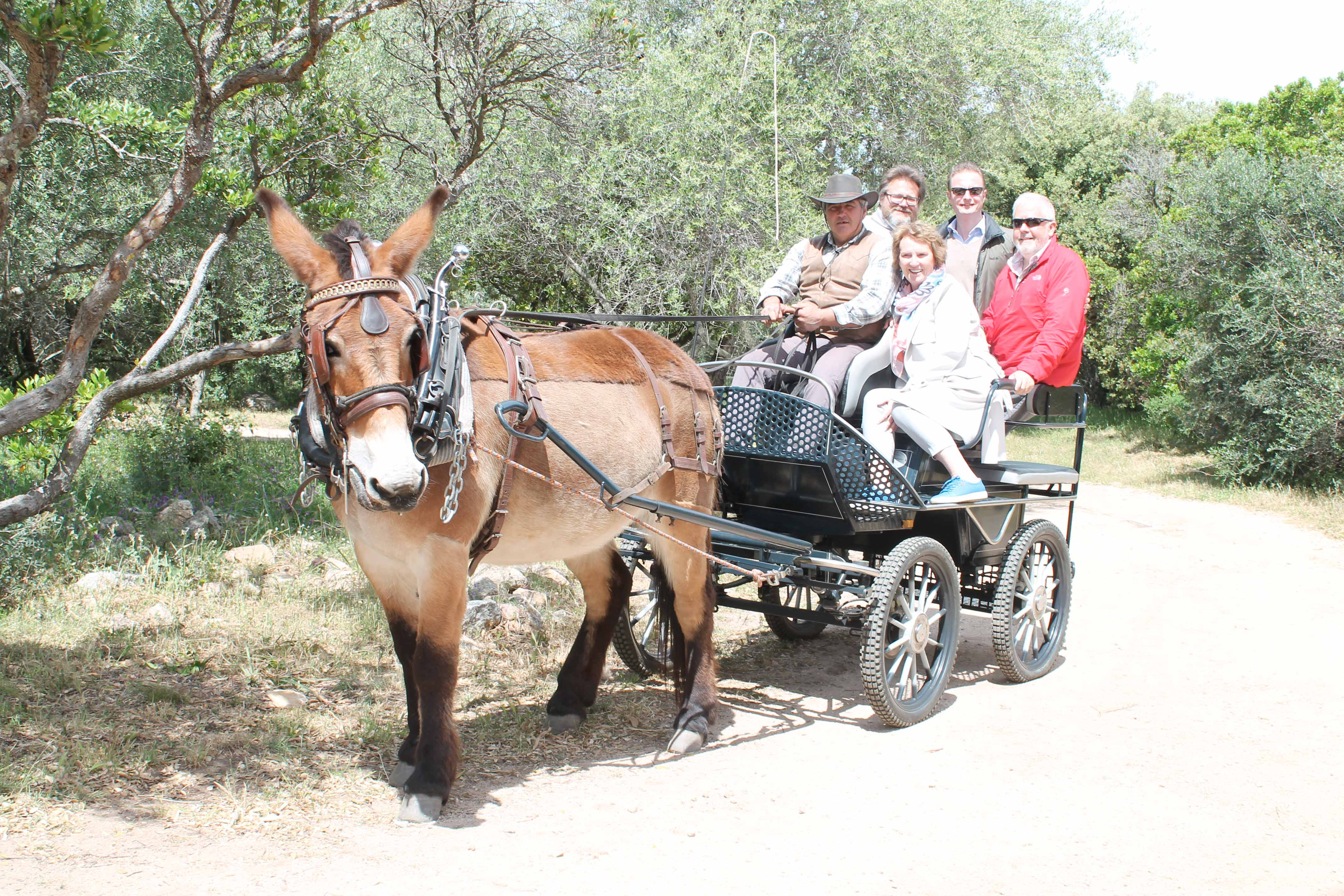 Corsica wine tour, cart with donkey
