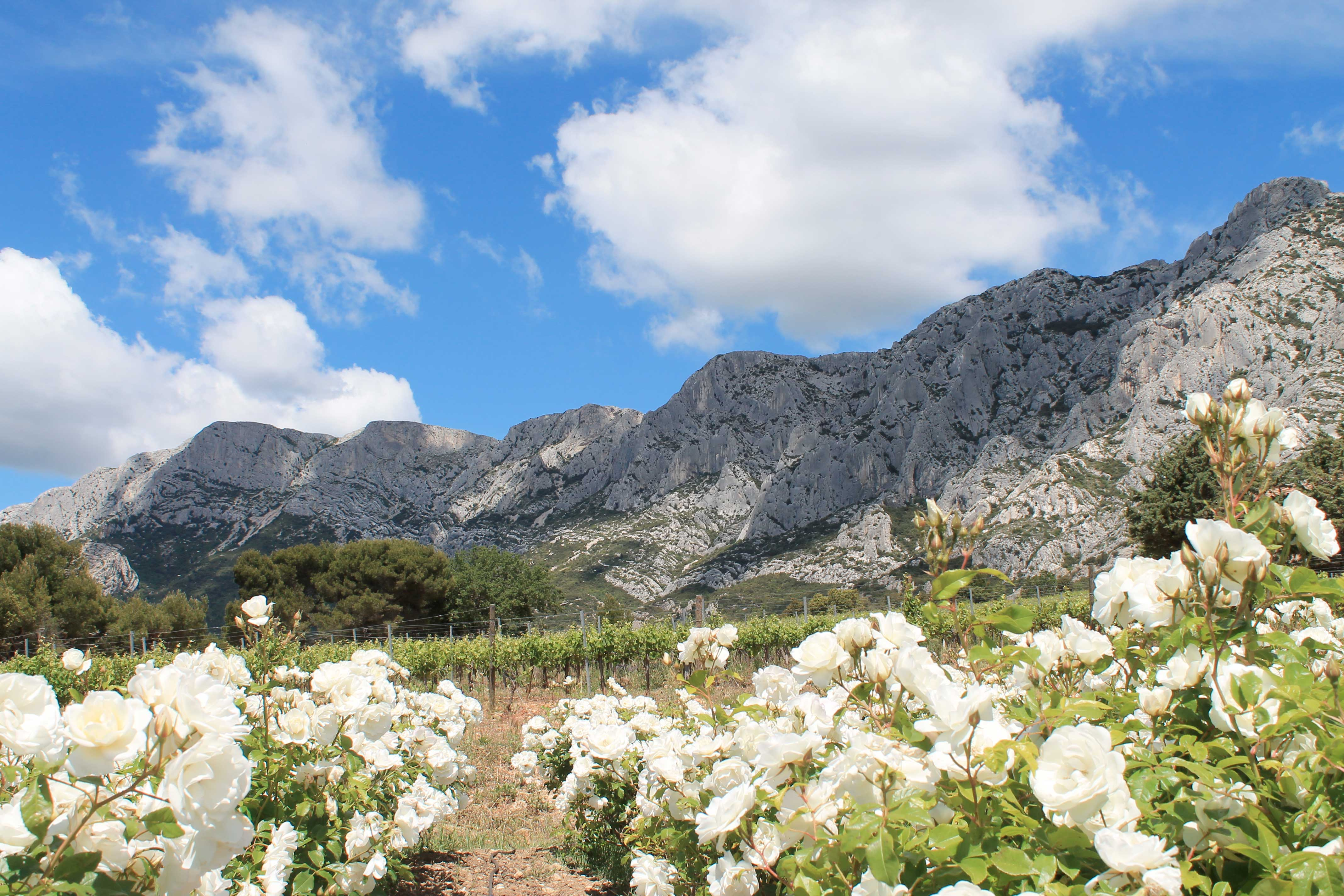 Wine and mountain excursions, blooming flowers and Mount Sainte Victoire