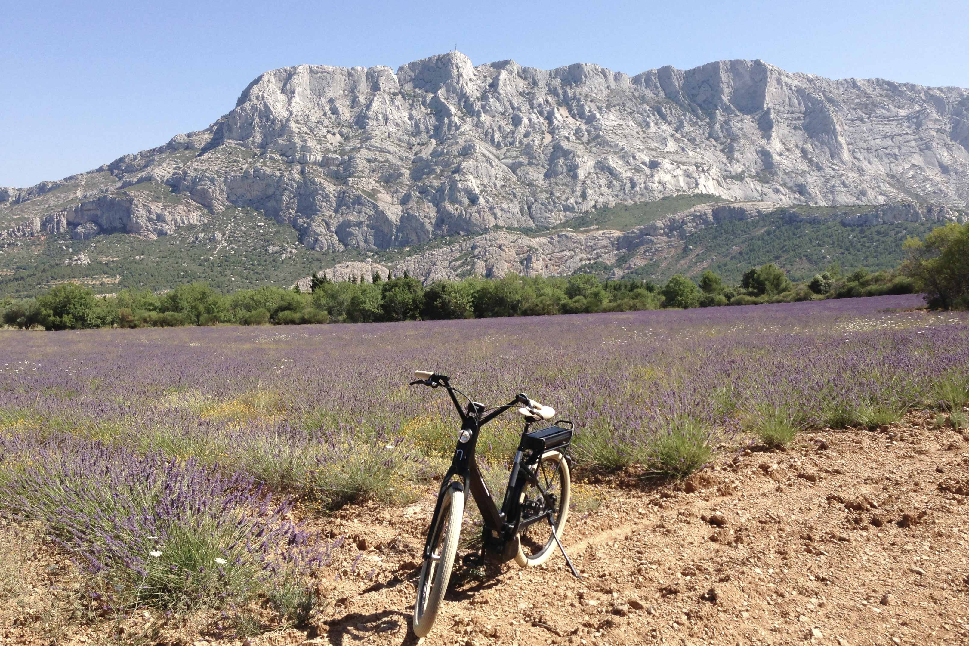 Wine and bike excursion, lavender field and Mount Sainte Victoire
