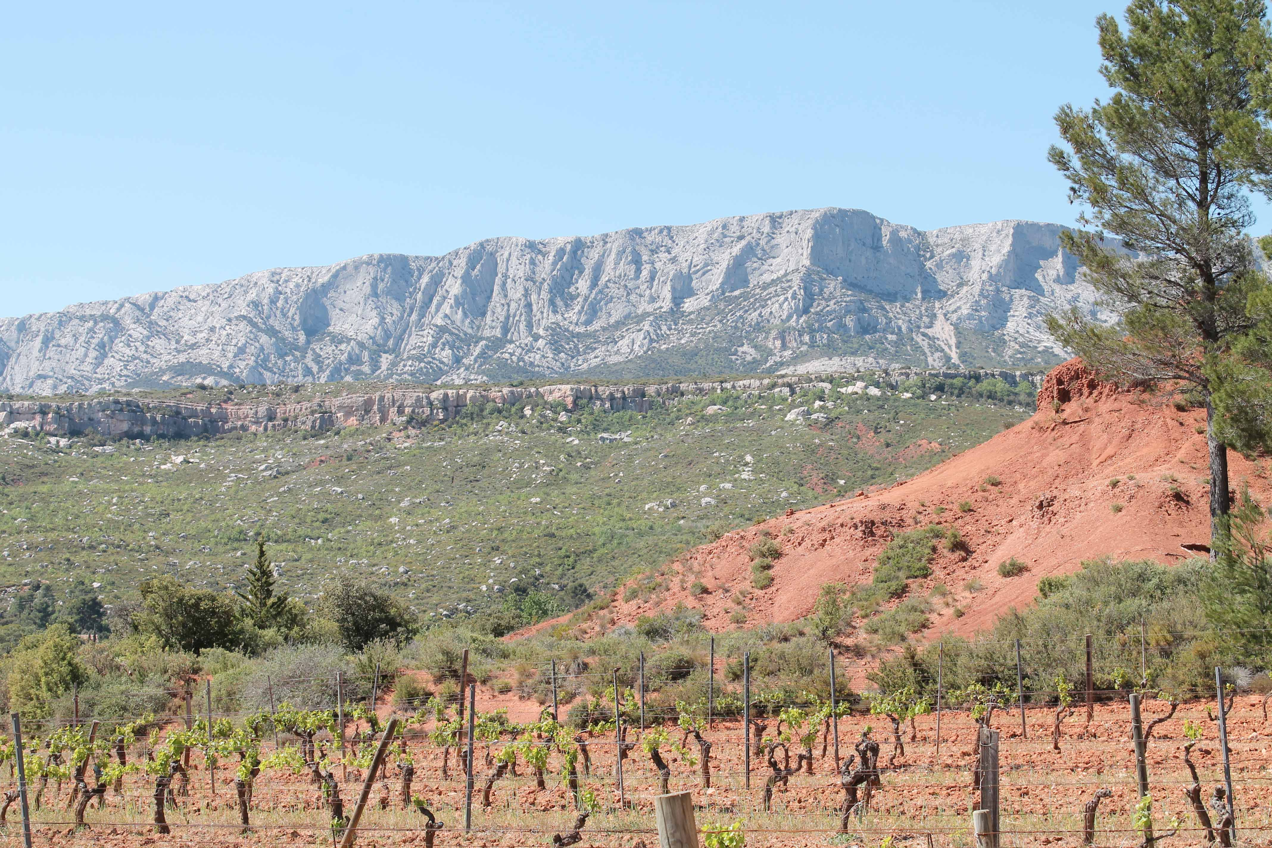 Wine and bike excursion, vineyard nearby Sainte Victoire