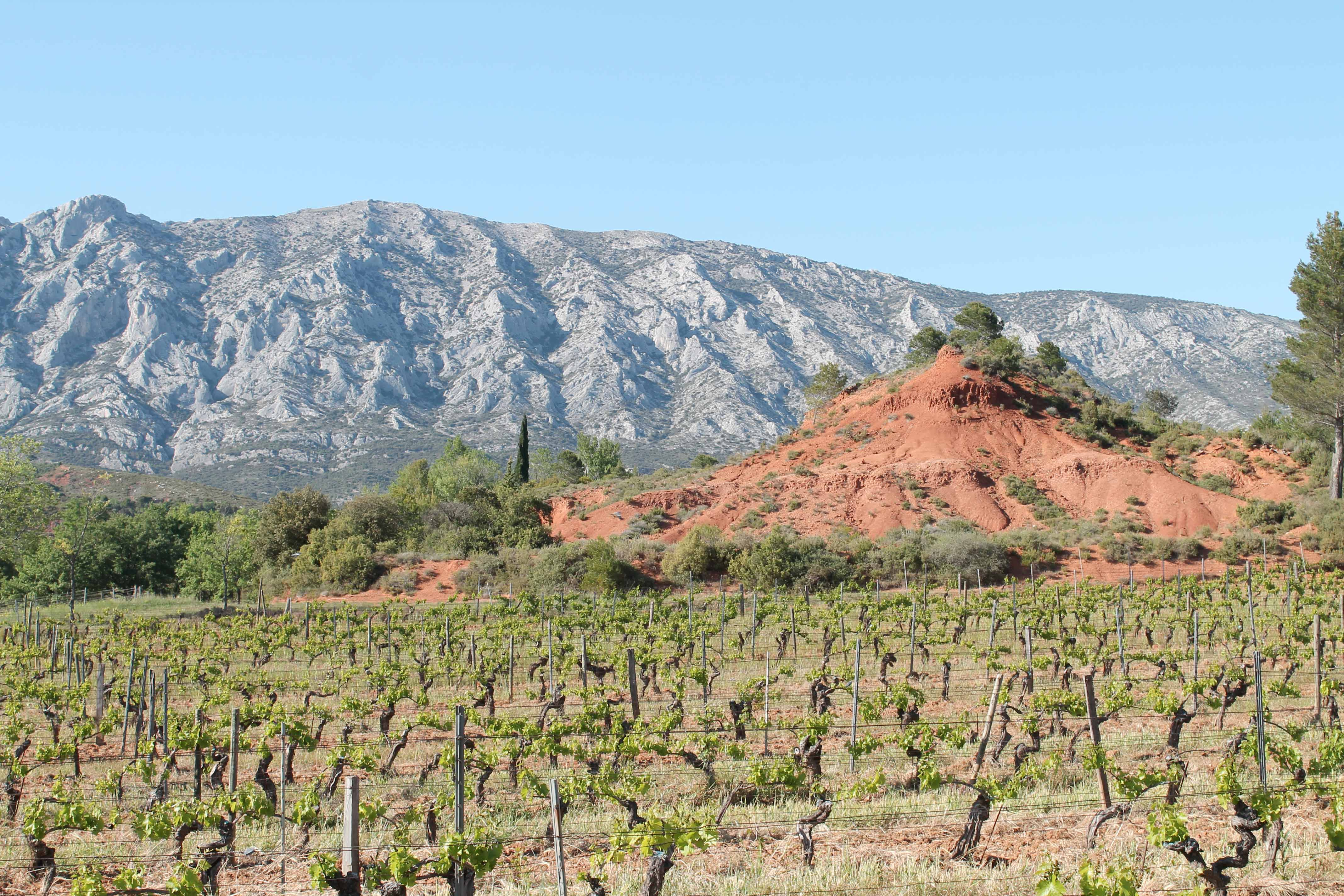Wine and bike excursion, vineyards with Mount Sainte Victoire