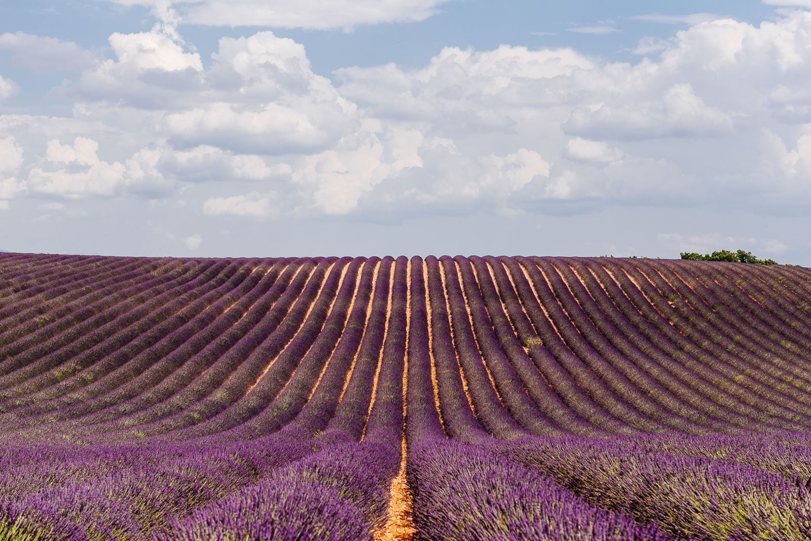 A la carte Provence tour, lavender field