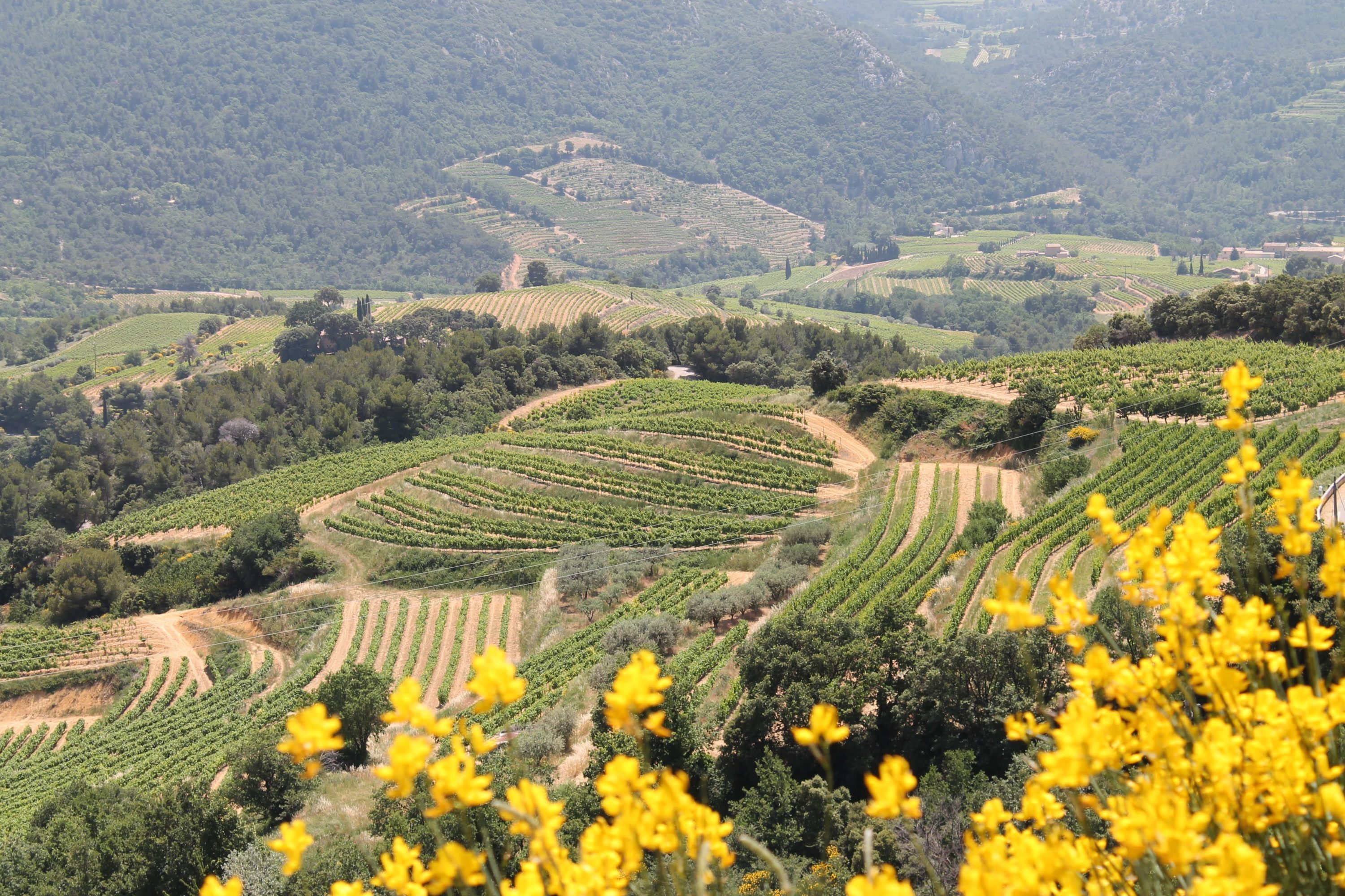 Rhone Valley wine tour, hilltop vineyards