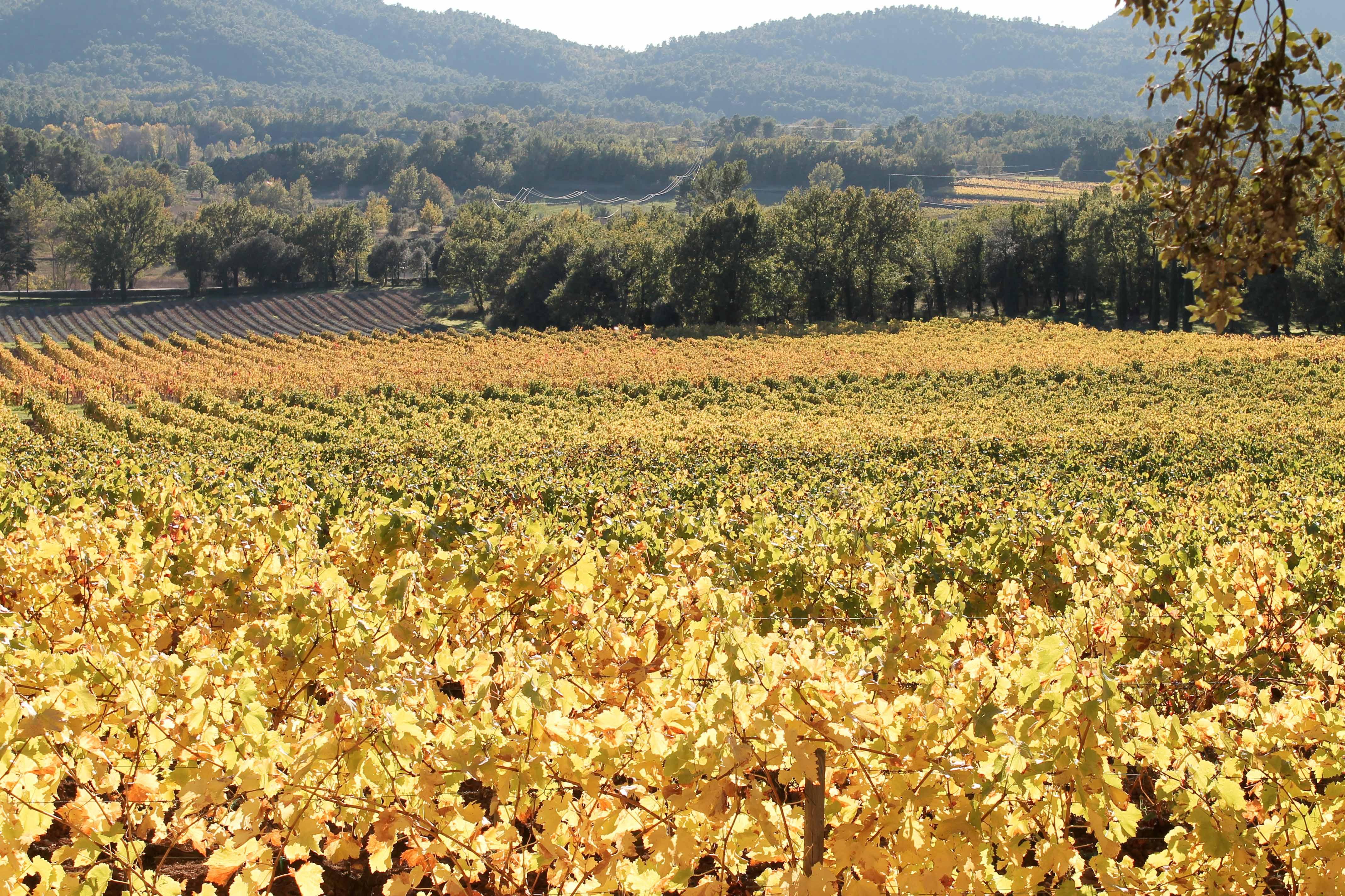 Aix en Provence wine tour, full view on vineyard