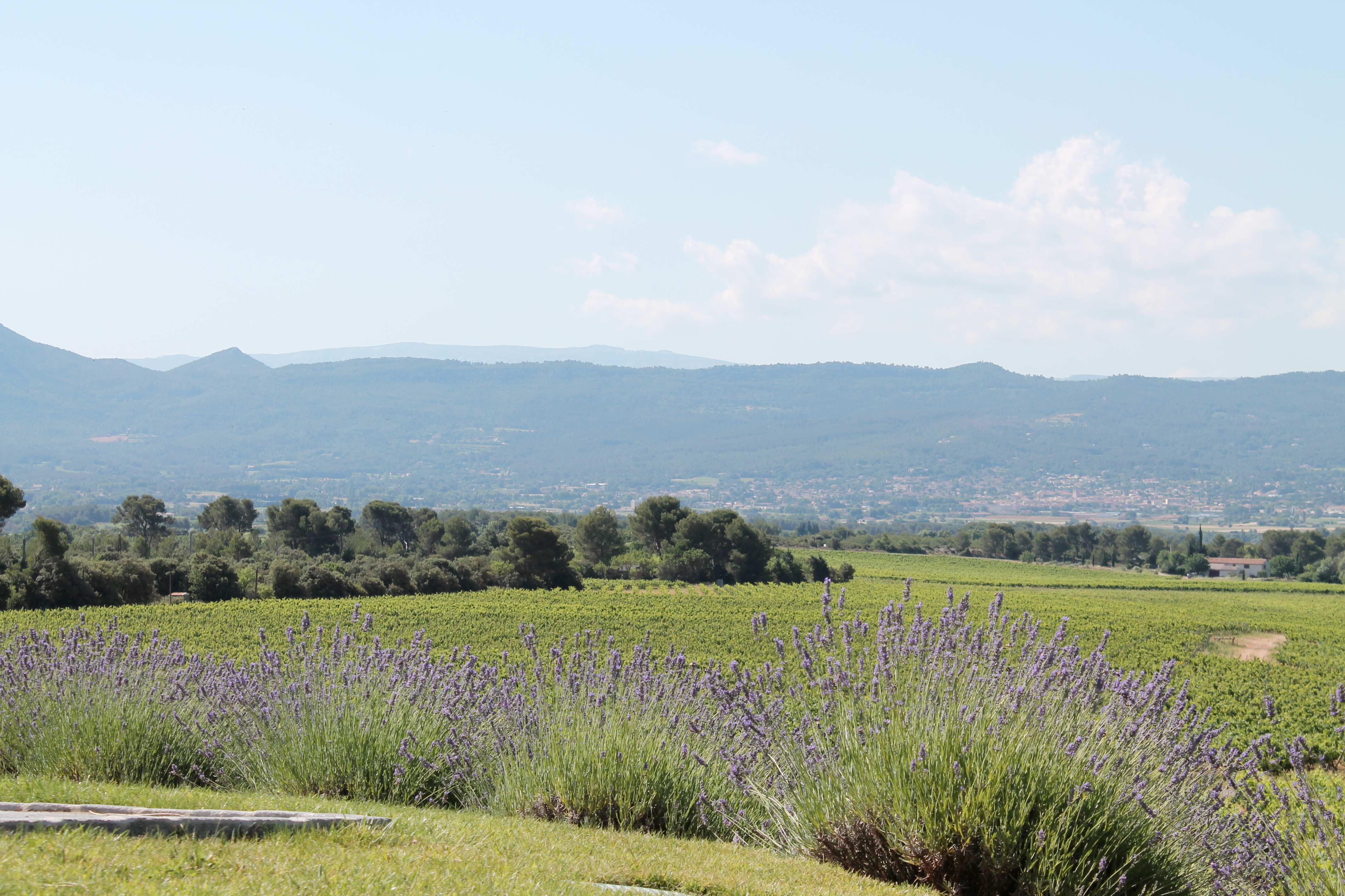 Aix en Provence wine tour, lavender, vineyard and mountain