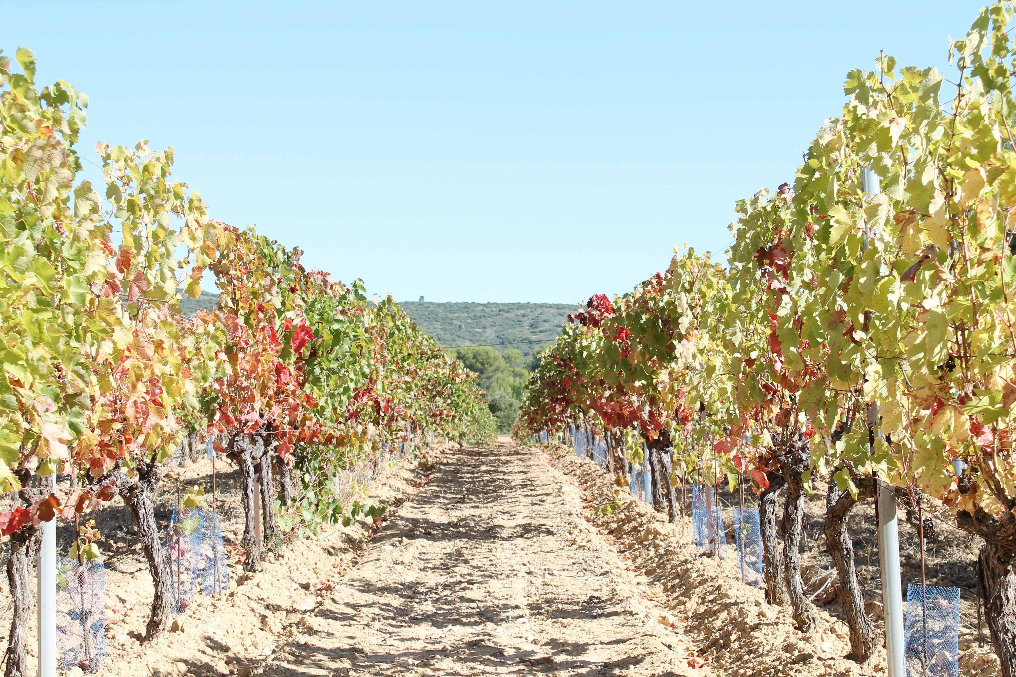 Aix en Provence wine tour, vineyard in spring