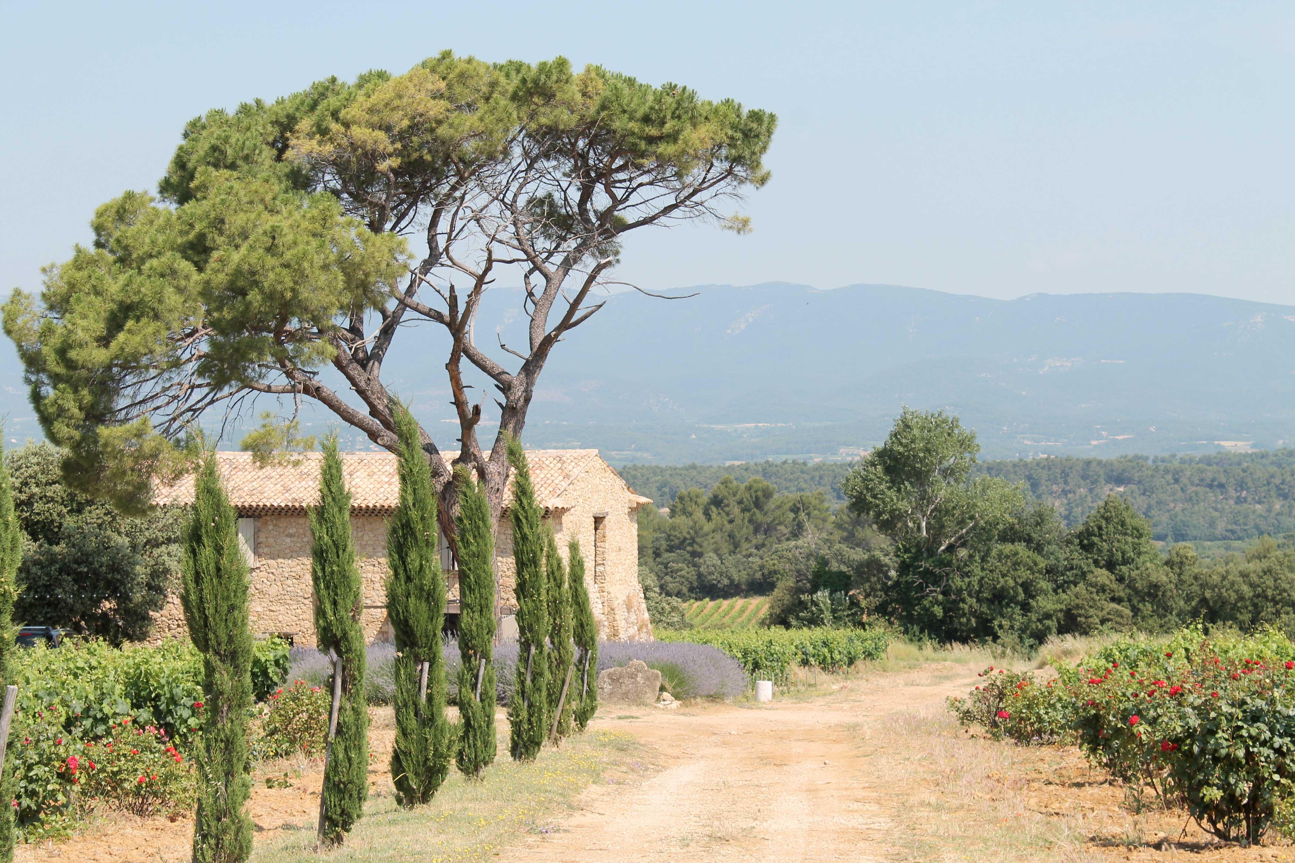 Aix en Provence wine tour, stonehouse in vineyard