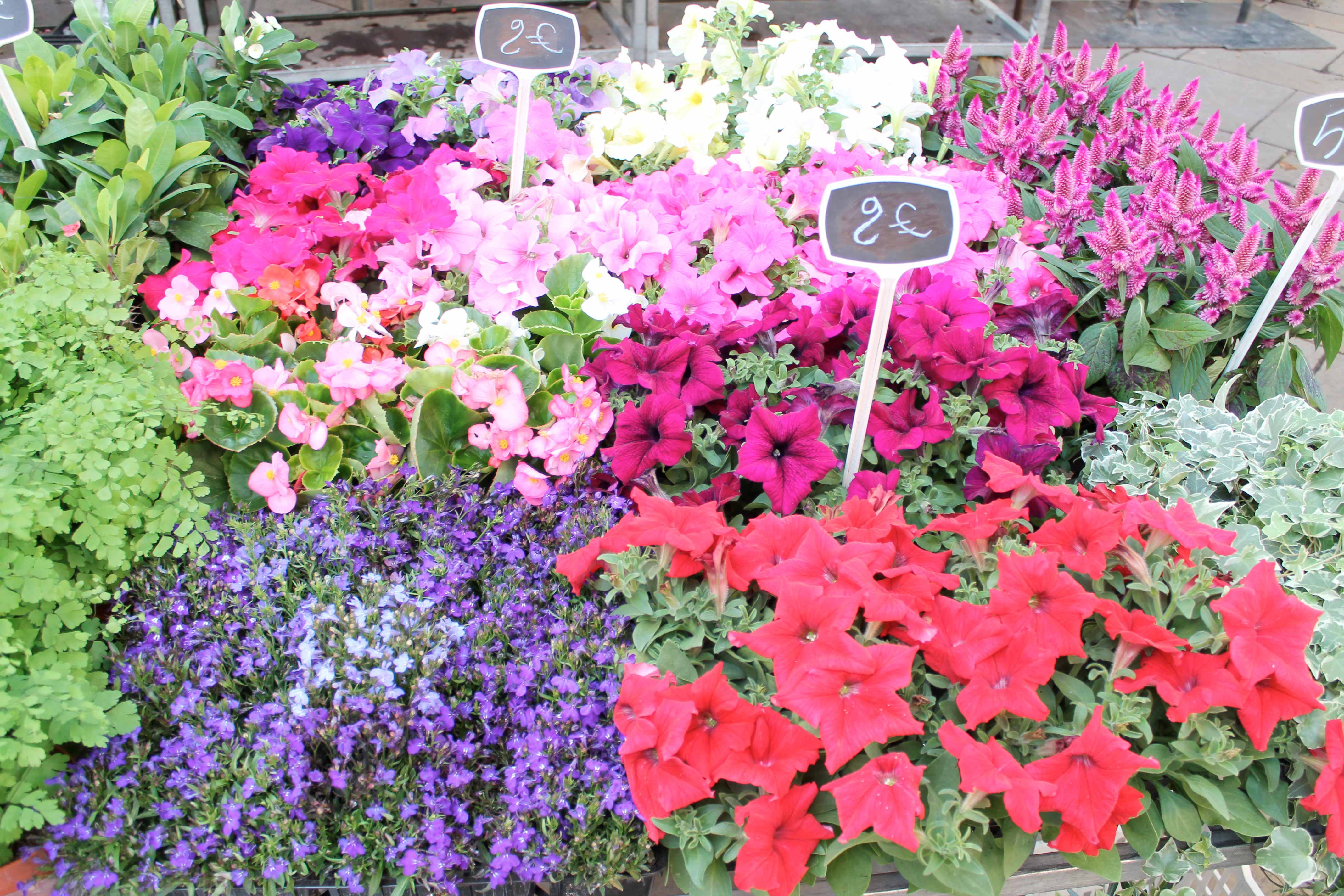 Shore excursion, flower stall, Aix en Provence