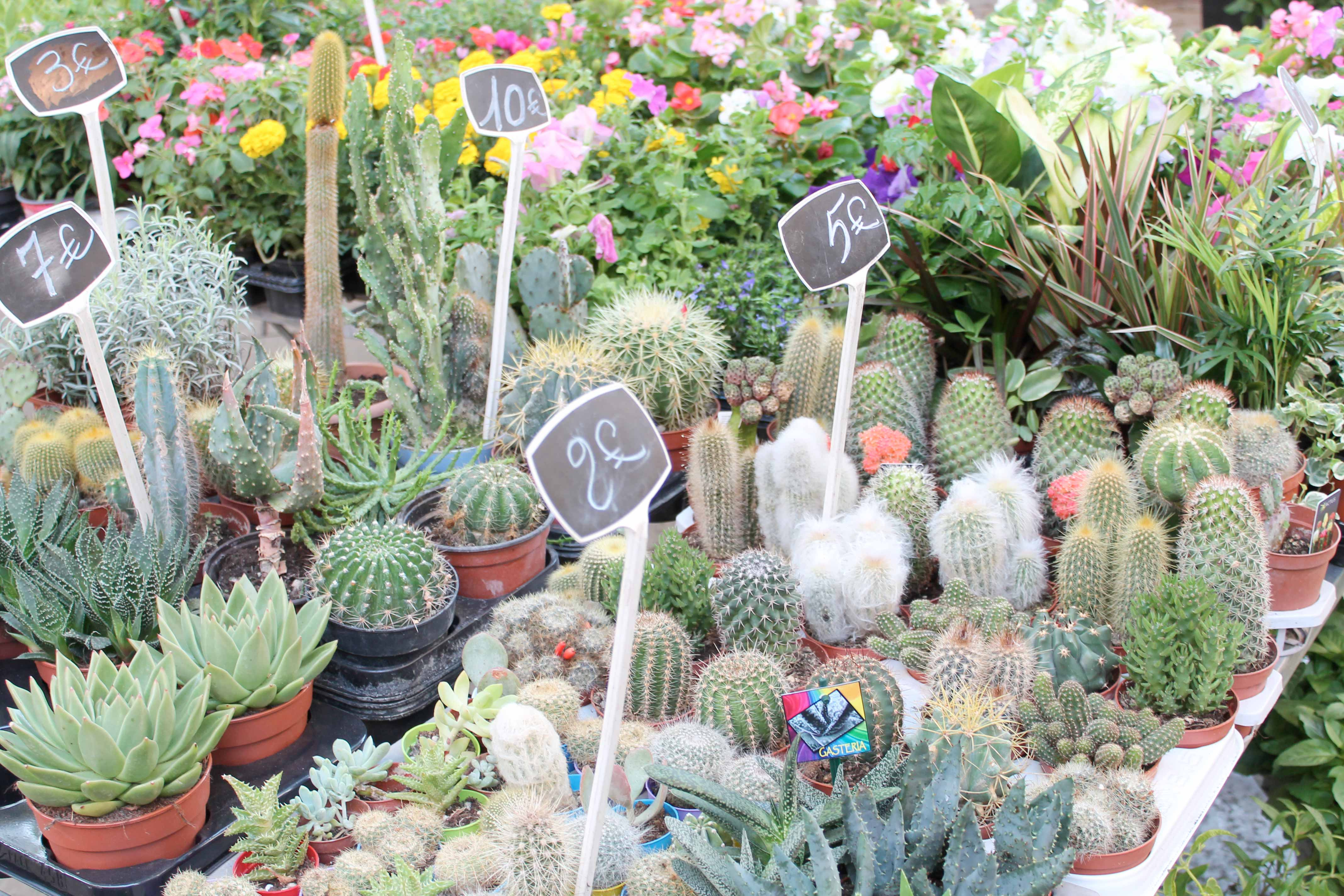 Shore excursion, cactus stall, Aix en Provence