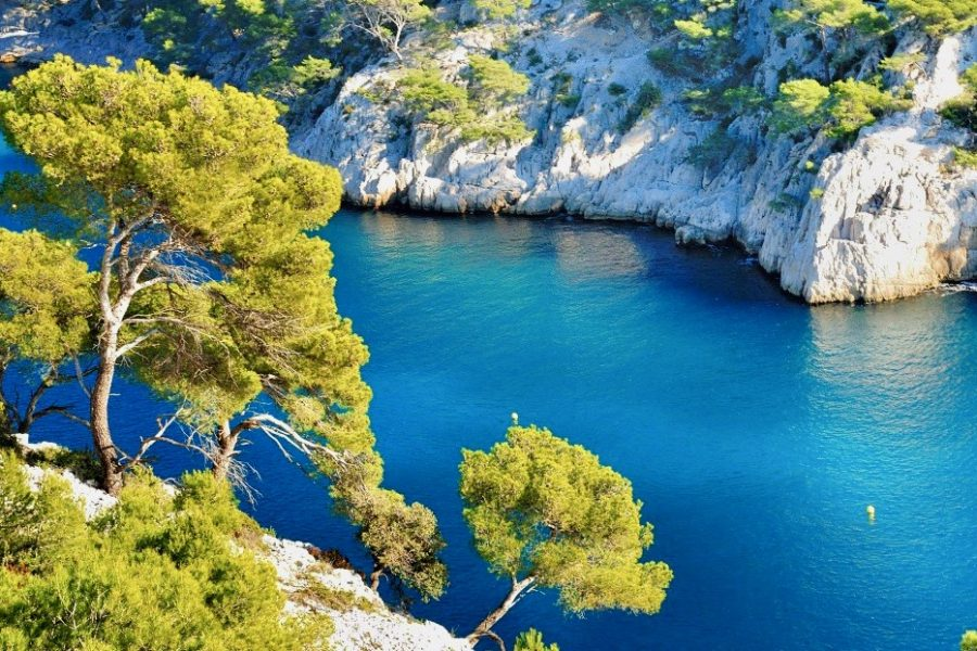 Wine and sailboat tour, calanque from a cliff with pine trees
