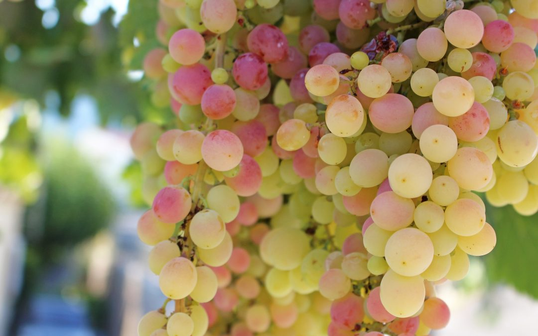 4 Common Wine Myths