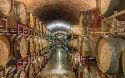 How to become a wine producer ?