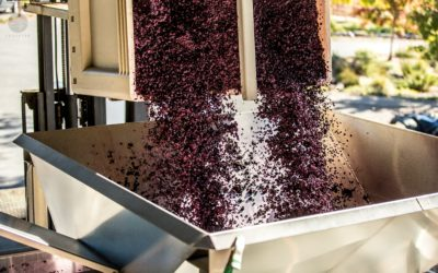Cutting edge technologies that are changing the world of viticulture