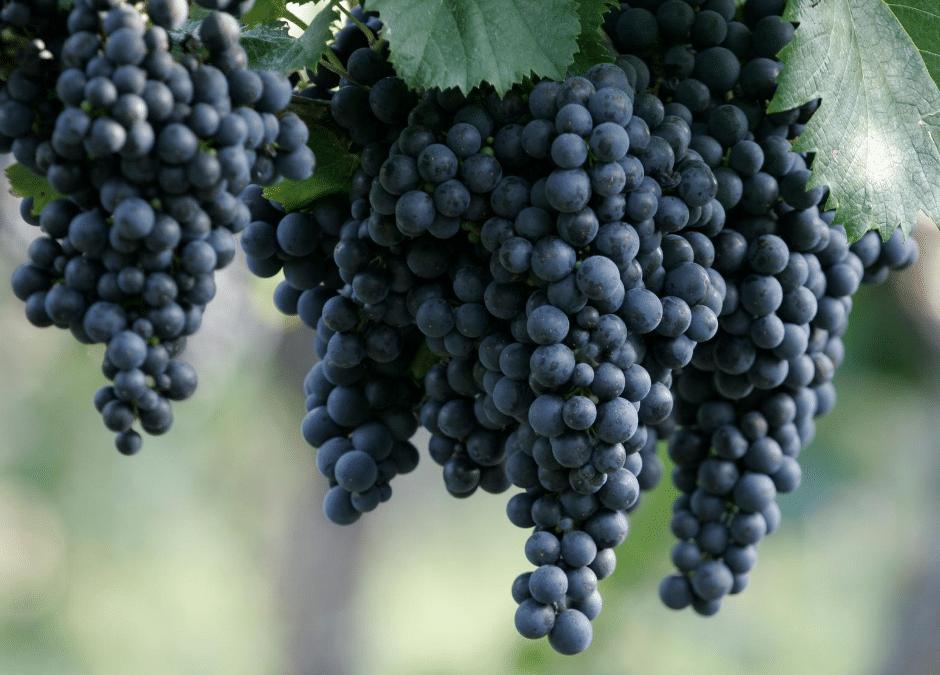 prestigious wine tour in provence