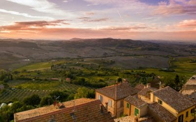 A quick overview of wines from Provence!